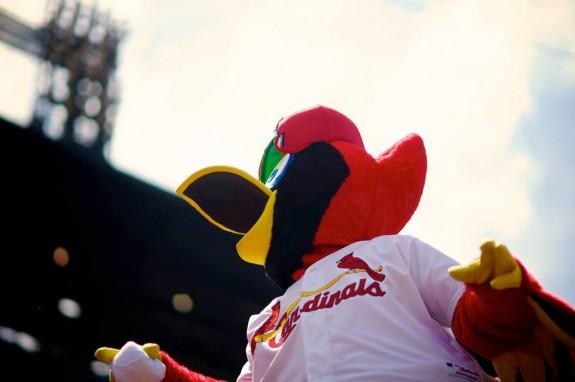 St. Louis Cardinals Fredbird
