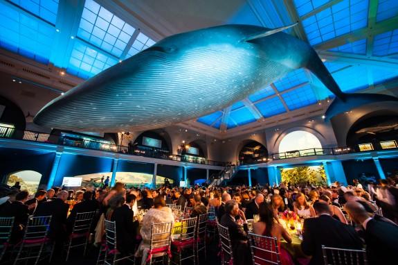 RA Gala giant whale