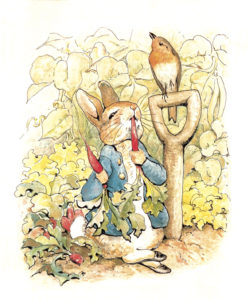 Children's Book Illustrations Peter Rabbit