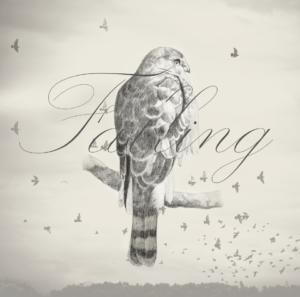 Album Cover, Falling Fences II