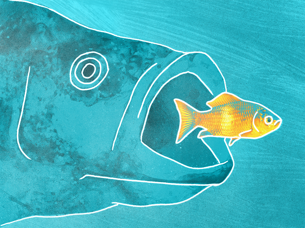 Illustration – big fish eating small fish